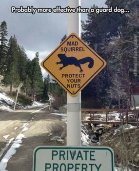 mad-squirrel-warning-sign-285x350.jpg