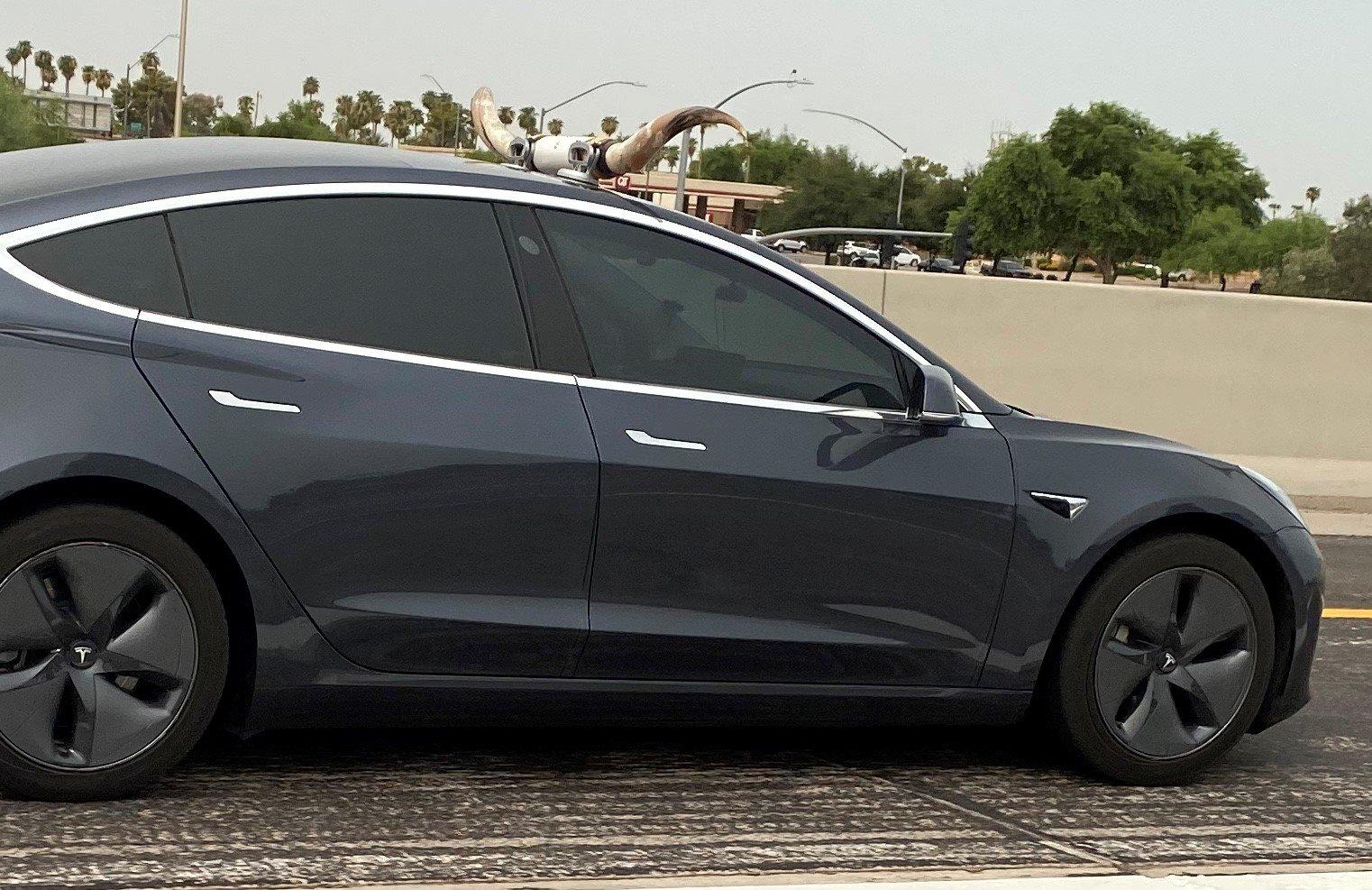 Texas Long Horn Tesla.jpg